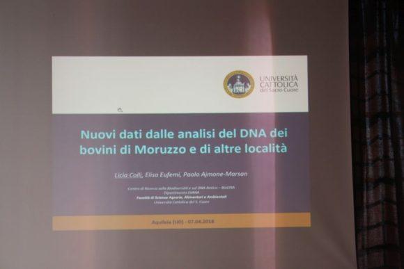 7 apr 2018, Aquileia, analisi DNA bovini Moruzzo.