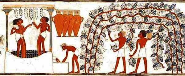 Chiara ZANFORLINI, Archeologia e dieta nell'Antico Egitto.