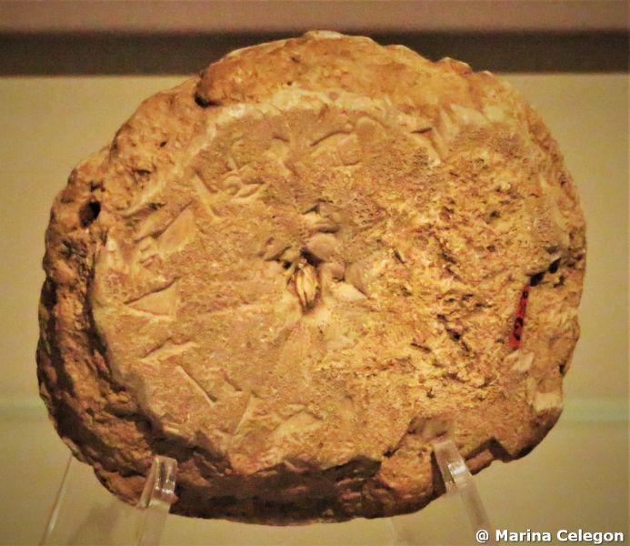 Un fossile … per la vita eterna, di Marina Celegon.